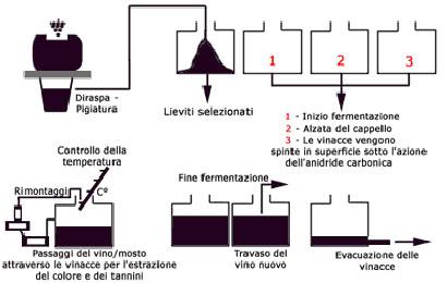 vinificazioneinrosso1