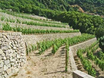 vitigni-ischia